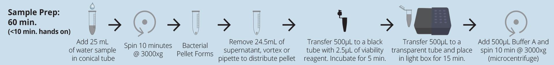 Veriflow Legionella species   Invisible Sentinel